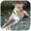 Photo 2 - Terrier (Unknown Type, Medium)/Labrador Retriever Mix Dog for adoption in Kingwood, Texas - Hudson
