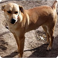 Adopt A Pet :: Lightening - Glenpool, OK