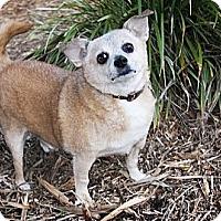 Adopt A Pet :: Pepe - North Palm Beach, FL