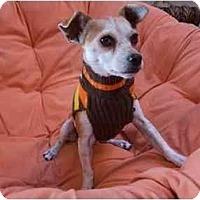 Adopt A Pet :: Jasper - Chimayo, NM