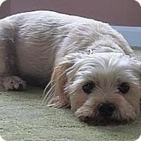 Adopt A Pet :: Oscar - kennebunkport, ME
