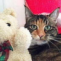 Adopt A Pet :: Lucy-Alice - Port Angeles, WA