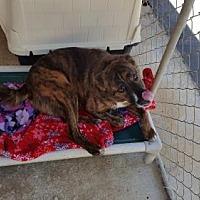 Adopt A Pet :: Yogi - Florida - Fulton, MO