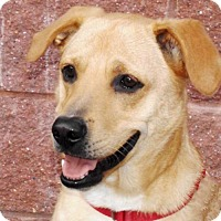 Adopt A Pet :: Stanley - Oxford, MS