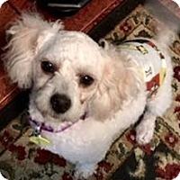 Adopt A Pet :: Scruffy aka Noodle in CT - Providence, RI