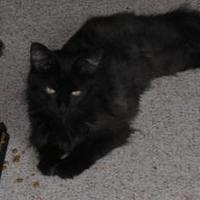 Adopt A Pet :: Mya - Warren, MI