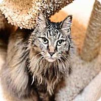 Adopt A Pet :: JILL - Murray, UT