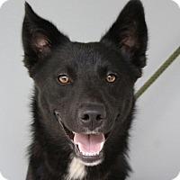 Adopt A Pet :: Julius - Washington, DC