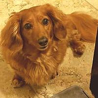 Adopt A Pet :: Chloe - Andalusia, PA