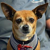 Adopt A Pet :: Bon Bon 224168 - Petaluma, CA