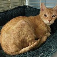 Adopt A Pet :: Bob - Margate, FL