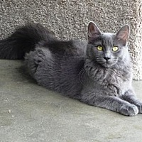 Adopt A Pet :: Libby - Lathrop, CA