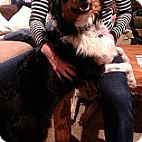 Adopt A Pet :: Pax - Glenrock, WY