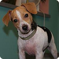 Adopt A Pet :: Delilah - Niceville, FL
