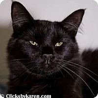 Adopt A Pet :: Eli - Hyde Park, NY