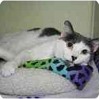 Adopt A Pet :: Harmony - Marietta, GA