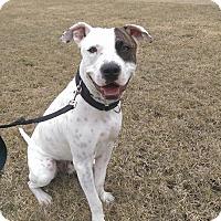 Adopt A Pet :: Subway - Vernon Hills, IL