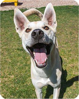 Husky Mix Dog for adoption in Fruit Heights, Utah - Diezel