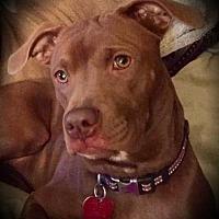 Adopt A Pet :: Saige Mae - Quinlan, TX