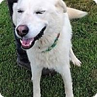 Adopt A Pet :: Korrie - Germantown, MD