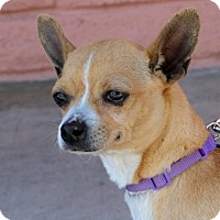Adopt A Pet :: Costata Seashell -- HOSPICE - Pittsburg, CA