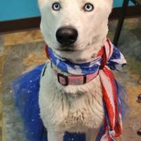 Adopt A Pet :: Pale Ale - Rio Rancho, NM