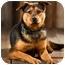 Photo 4 - Rottweiler Mix Dog for adoption in Portland, Oregon - Max