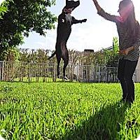 Adopt A Pet :: Sprout - Miami, FL