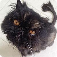 Adopt A Pet :: Penelope - Beverly Hills, CA