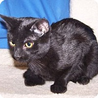 Adopt A Pet :: K-Nikki2-Pepper - Colorado Springs, CO