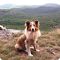 Adopt A Pet :: Lassie *VIDEO* - Columbia, SC