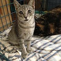 Adopt A Pet :: Pasquali Fe1-9216 - Thibodaux, LA