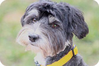 Tibetan Terrier Mix Dog for adoption in Allentown, Pennsylvania - Dulce