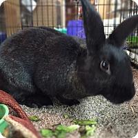 Adopt A Pet :: Niko - Williston, FL