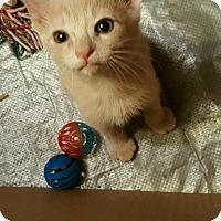Adopt A Pet :: Tiny - Weatherford, TX