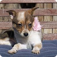 Adopt A Pet :: Rose - Austin, TX
