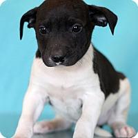 Adopt A Pet :: Cure - Waldorf, MD