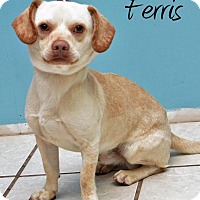 Adopt A Pet :: Ferris - DuQuoin, IL