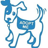 Adopt A Pet :: Cookie - Santa Barbara, CA