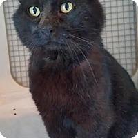 Adopt A Pet :: Alvin - Colfax, IA