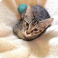 Adopt A Pet :: Tangerine - Tallahassee, FL