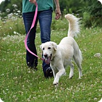 Adopt A Pet :: Turbo - Park Falls, WI