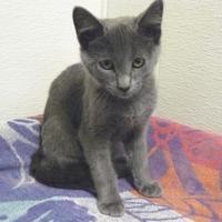 Adopt A Pet :: Pepper - Portage, WI
