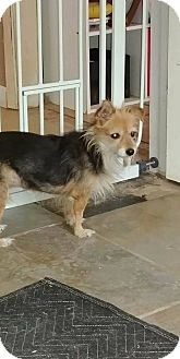 Terrier (Unknown Type, Small) Mix Dog for adoption in Toronto, Ontario - Francine