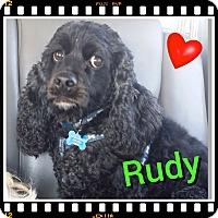 Adopt A Pet :: Rudy - Santa Barbara, CA