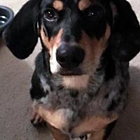 Adopt A Pet :: SEBASTIAN - Pennsville, NJ