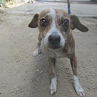 Adopt A Pet :: JEN - Porterville, CA
