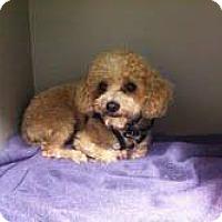Adopt A Pet :: muneco - Goleta, CA