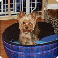 Adopt A Pet :: Desiree - Charlotte, NC