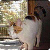 Adopt A Pet :: Mazie - Metairie, LA
